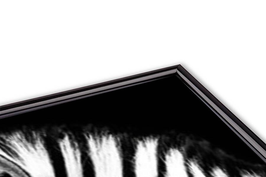 Juliste Zebra