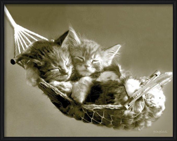 Juliste  KEITH KIMBERLIN - kittens in a hammock