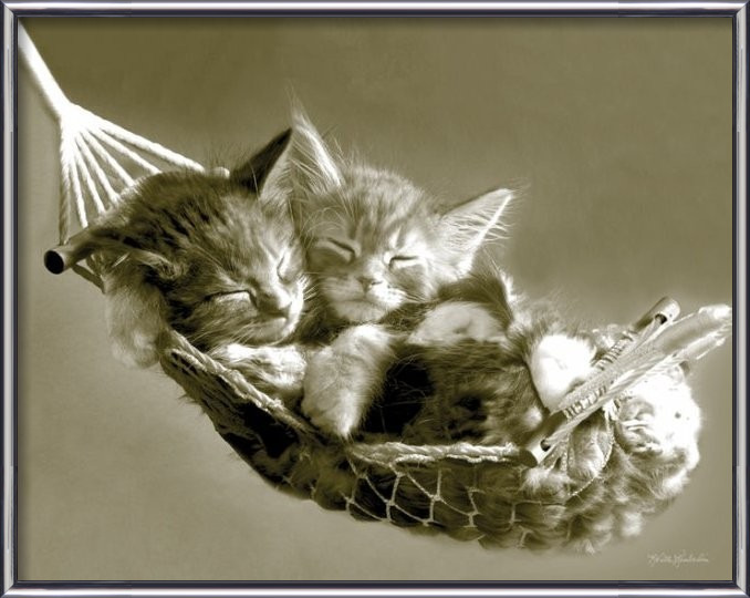 Juliste  KEITH KIMBERLIN - kittens in a hammock