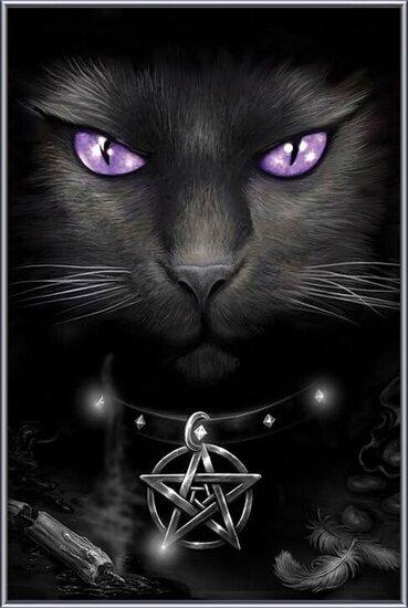 Magical cat Kehystetty laminoitu juliste