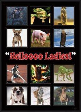 Juliste  Hellooo ladies ! - montage
