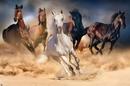 Hevoset - Five horses